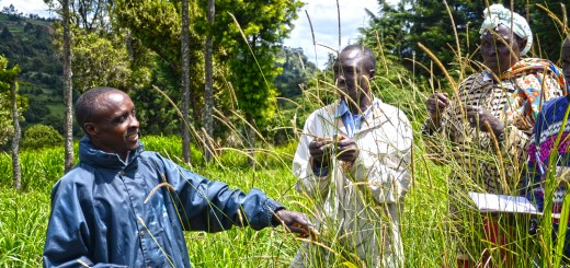 A volunteer farmer trainer in Kenya explains how to grow fodder for dairy cattle. Photo Credit: ICRAF/Sherry Odeyo
