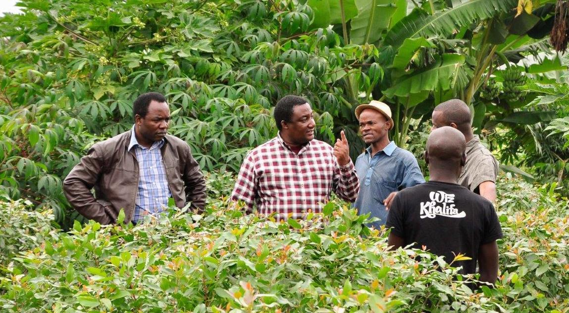 Alex Oduor and Malesu Maimbo, water engineers from the World Agroforestry Centre (ICRAF), talk with Khat farmers in Embu. Khat cultivation is severely impacting water availability yet is lucrative for farmers. Photo D Odhiambo/ICRAF