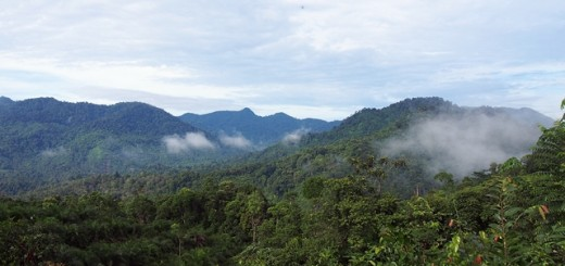 A community forest in Jambi Province, Indonesia. Photo: World Agroforestry Centre/Robert Finlayson