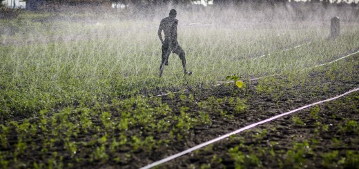 Sprinkler irrigation-in Ghana. Photo by Nana Kofi-Acquah/IWMI