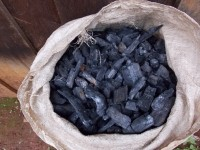 FEATURE: Can we grow our way out of the charcoal crisis?