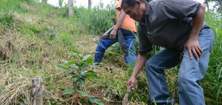 Ardenio Lozano, a farmer in Lantapan, Bukidnon province of the southern Philippines, is one of the beneficiaries of an existing payments for environmental services scheme. Photo: World Agroforestry Centre/Amy Cruz