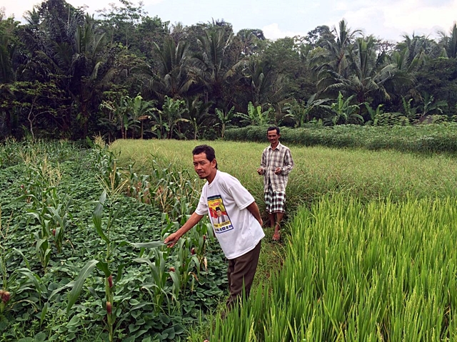 Farmers examining crops in their plot in Cidanau, Indonesia. Photo: World Agroforestry Centre/Technical University of Cologne/Lina Tennhardt