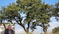 Promoting early-maturing, oil-rich shea trees and holding off the charcoal threat