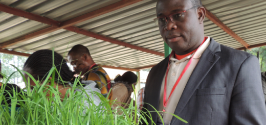 Dr Achigan-Dako during a leaf sampling exercise for marker-assisted selection at the African Plant Breeding Academy training in Nairobi. Photo by C Watson/ICRAF