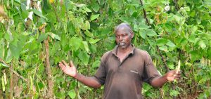James Oroko with his climbing beans from Legume CHOICE project. Photo by Danyell Odhiambo/ICRAF