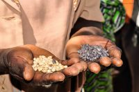 In Kenya, farmers see early rewards from adding legumes and trees to their farms