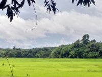 A new hope for agroforestry in Myanmar