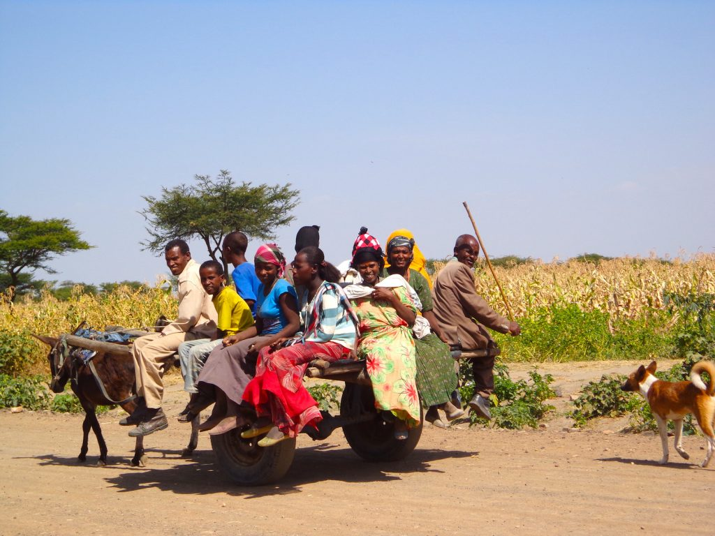 Farmers need different things from trees. Photo of Oromia farmers by Miyuki Iiyama/ICRAF.