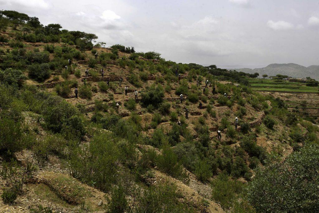 Ethiopia, Tigray region, Kola District. As part of the World Bank funded Sustainable Land Management Program, the whole community, men as well as women, work relentlessly to prevent erosion and land degradation by planting local species of trees. Photo by Andrea Borgarello/TerraAfrica