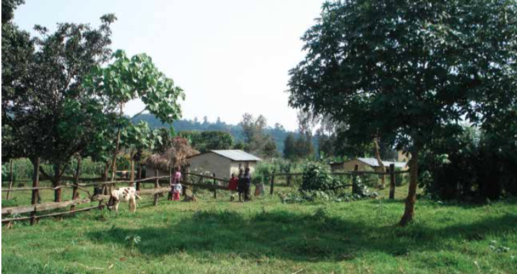 Example of a typical crop-livestock integrated farm in the MICCA pilot project in Kenya. Photo: FAO/ Janie Roux