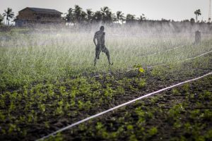 Sprinkler irrigation in Ghana. Photo by Nana Kofi Acquah/IWMI