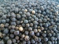 Black pepper: a climate-smart solution for homegardens?