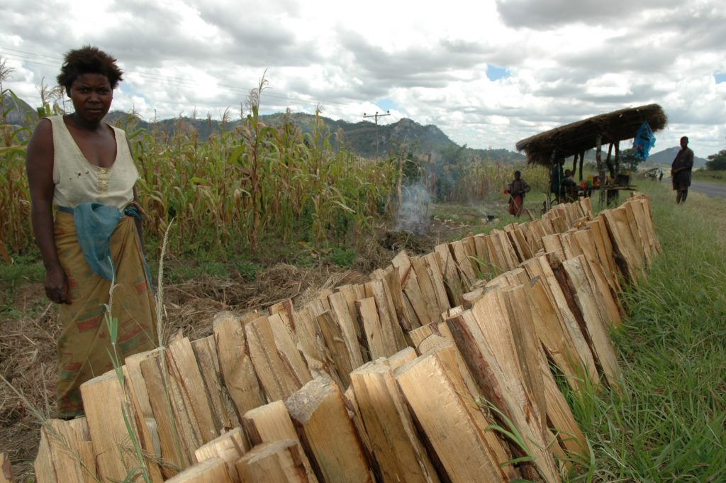 Fuel wood seller in Malawi. Photo: World Agroforestry Centre