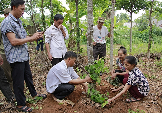 Training in how to establish black pepper on a mấc tree. Photo: World Agroforestry Centre/Hai Van Le