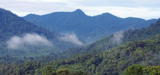 Keeping ASEAN's forests standing is critically important for the future of our planet. Photo: World Agroforestry Centre/Robert Finlayson