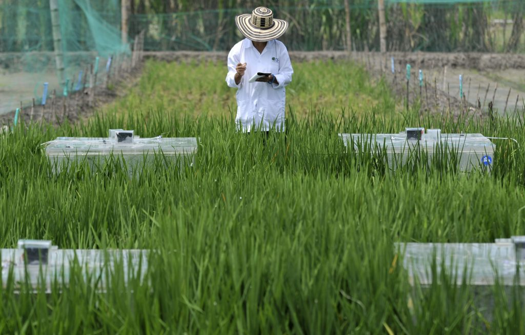 The International Center for Tropical Agriculture (CIAT) is one of many centers that are measuring greenhouse gas emissions from agriculture in tropical, developing countries. Photo: N. Palmer (CIAT)