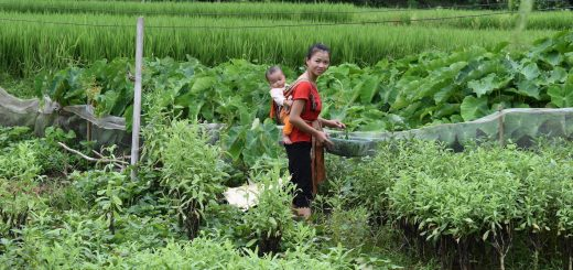 Dao woman and child harvesting vegetables in Yen Bai, Viet Nam. Photo by Lisa Hiwasaki/ICRAF