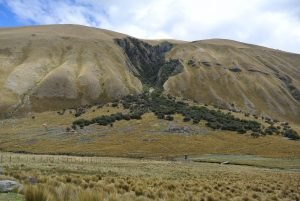 Remnants of quenuale forest on almost bare hills in Huascaran National Park. Photo by Cathy Watson/ICRAF