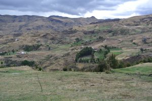 Highly degraded sloping land in Peru's Ancash region. The vegetation is dominated by species of Eucalyptus. Photo by Cathy Watson/ICRAF
