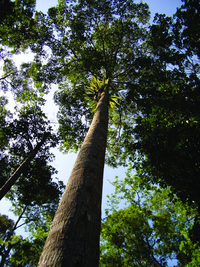 Forests play a critical role in the planet's water cycle. Photo: World Agroforestry Centre