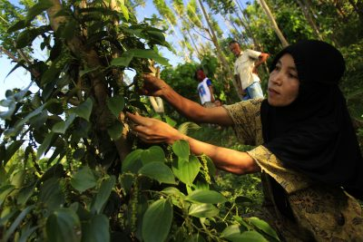 Gender in agriculture: creating opportunities for women