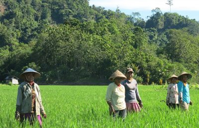 Helping rice farmers grow trees for adapting to climate change