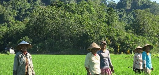 Farmers in a rice-and-agroforestry landscape in Indonesia. Photo: World Agroforestry Centre