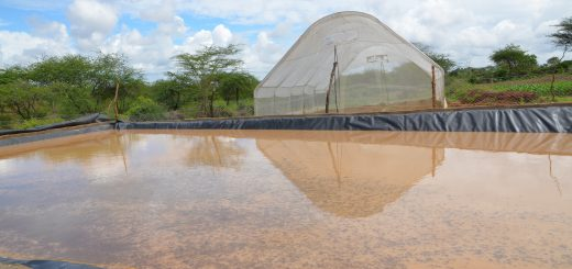 A water pan for rainwater harvesting in Machos County, Kenya. Photo: World Agroforestry Centre/Tabitha Obara