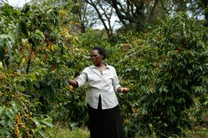 Esther Ruto, a smallholder farmer in western Kenya, on her coffee farm. Photo: World Agroforestry Centre