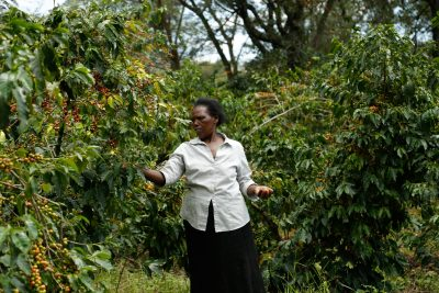 Smallholder farmers in Kenya in the race against climate change