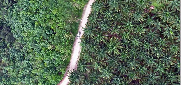 Oil-palm and forest landscape in South Sumatra. Photo: World Agroforestry Centre