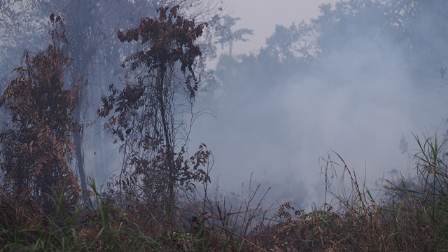 Peat fires can smoulder for many months, emitting large amounts of smoke and greenhouse gases. Photo: World Agroforestry Centre/Robert Finlayson
