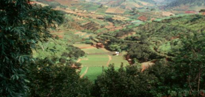 A multifunctional landscape containing a large number of different crops