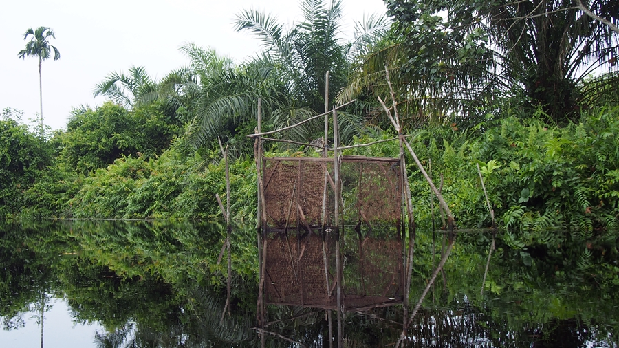 Peatland canal fishtrap, Jambi. Photo: World Agroforestry Centre/Robert Finlayson