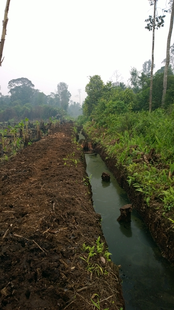 New primary drainage canal. Photo: World Agroforestry Centre/Robert Finlayson
