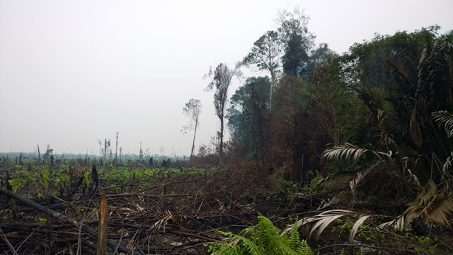 Newly cleared peatland beside remant 'protection' forest, Jambi. Photo: World Agroforestry Centre/Robert Finlayson