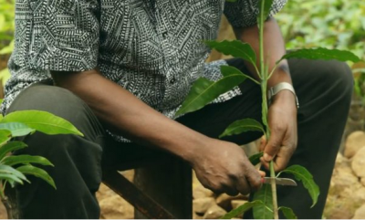 How Growing Trees Helps Fight Poverty in Cameroon