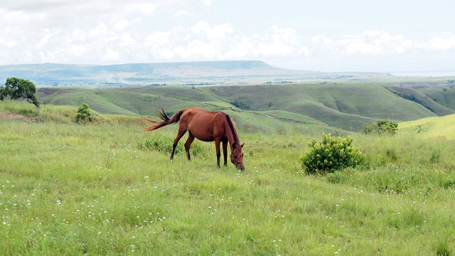 A high savannah view. Photo: World Agroforestry Centre/Robert Finlayson