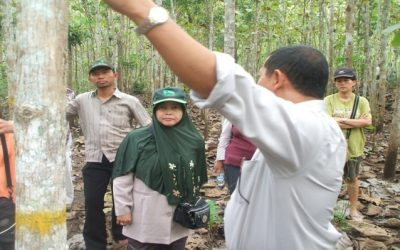 The significance of planted teak for smallholders
