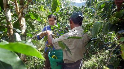 Peru's integrated approach to nationally determined contributions can boost agroforestry's role in fighting climate change