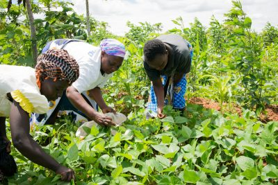 Women in Kenya improve their families' food security through simple land-restoration technology