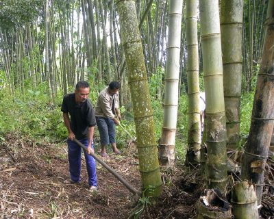 How to grow a bamboo industry