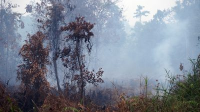 How much carbon dioxide is emitted from smallholders' farms on peatland?