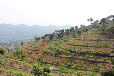 Bhutan and Nepal learn more about agroforestry in Vietnam