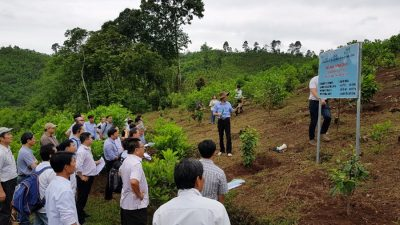 Collective effort toward more sustainable forestry management in Viet Nam