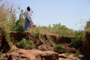 Reversing Land Degradation by Scaling up Evergreen Agriculture in Africa (Regreening Africa)