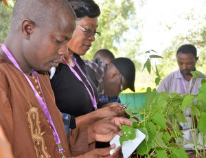 Third cohort graduates from the UC Davis African Plant Breeding Academy