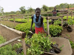 Agroforestry with refugees in Uganda: overwhelming demand and a huge desire to plant