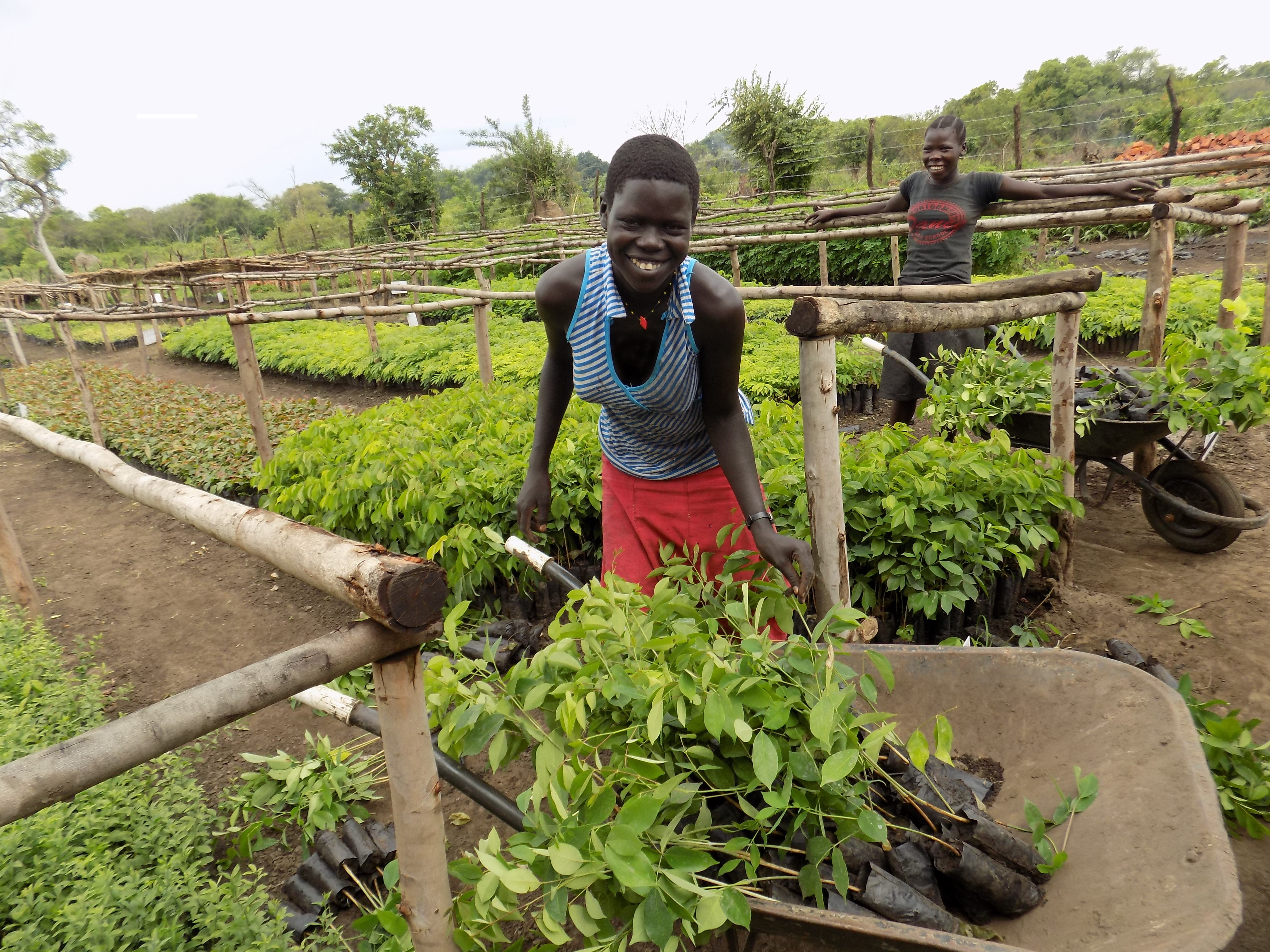 Agroforestry With Refugees In Uganda Overwhelming Demand And A Huge